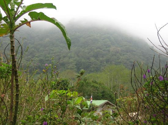 Bosque de Paz: view of cloud forest from hotel