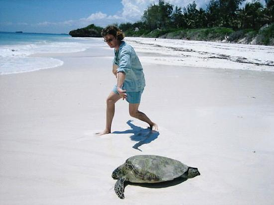 Kanani House: Oli encouraging the turtle back to the sea