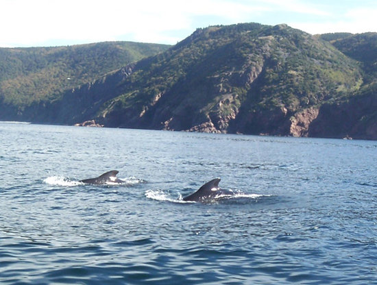 Whale Cruisers