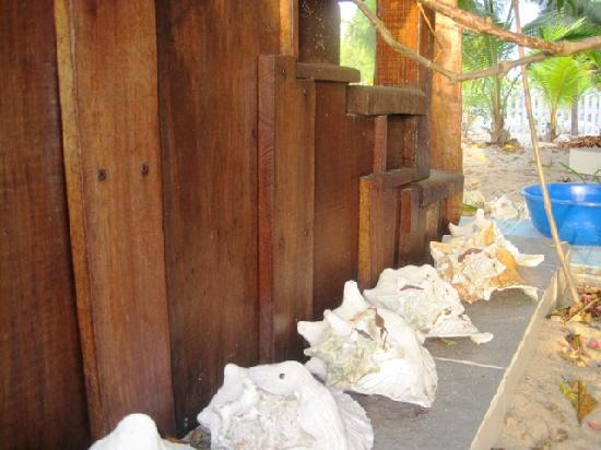 Colibri House: decorative conch shells along the steps to the house