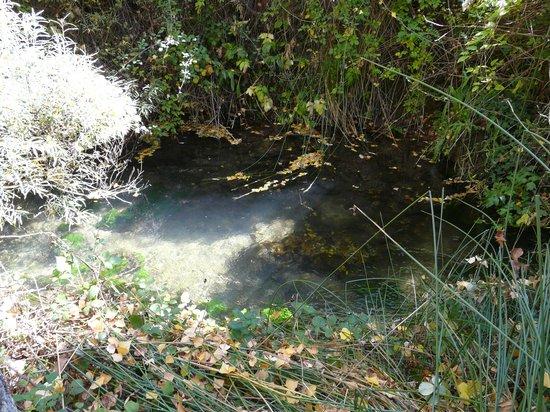 Paterna del Madera, Hiszpania: el rio madera