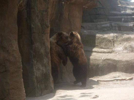 Indianapolis Zoo Photo