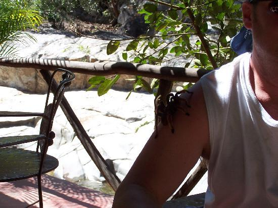 Los Veranos Canopy Tour: Tarantula on Dave's shoulder - in bar area.