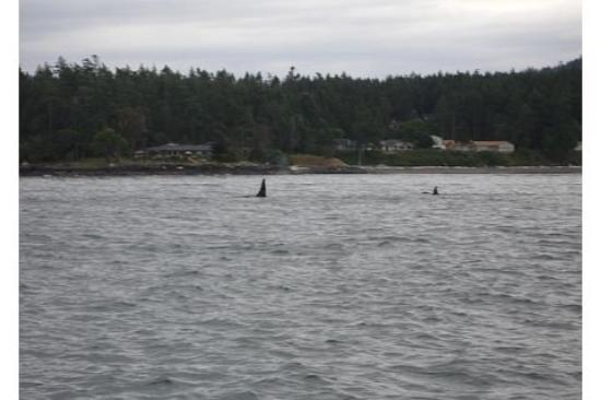 Orcas Island, WA: I'll do this again in a heartbeat!