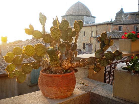 Camere Renzi: terrace in daytime