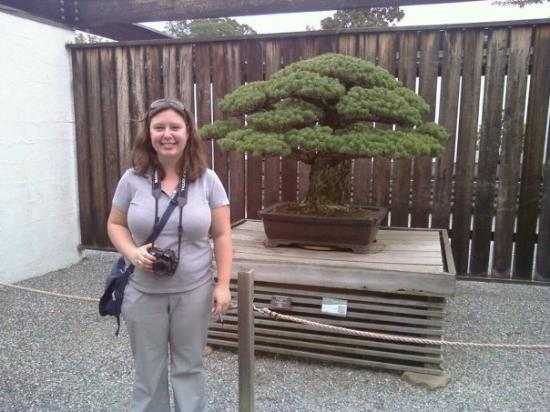 Oldest Bonsai Tree At The National Arboretum Started In 1600 S Picture Of U S National Arboretum Washington Dc Tripadvisor