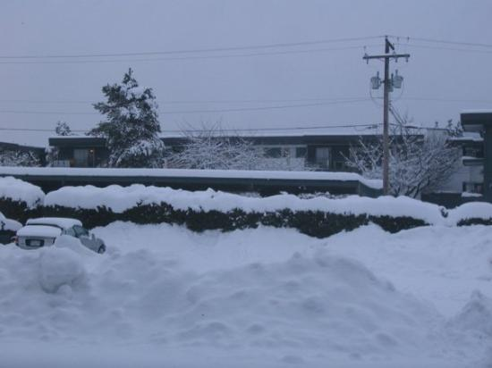 Surrey, Kanada: My 1st winter.