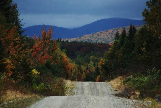 Wilson Pond Camps: Logging road in mountains
