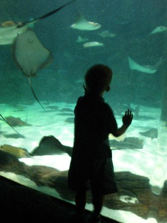 Ripley's Aquarium of Myrtle Beach: Watching the sting rays float by