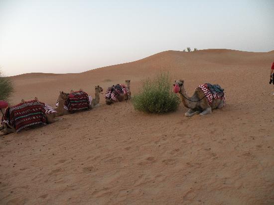 Al Maha, A Luxury Collection Desert Resort & Spa: Camel Riding