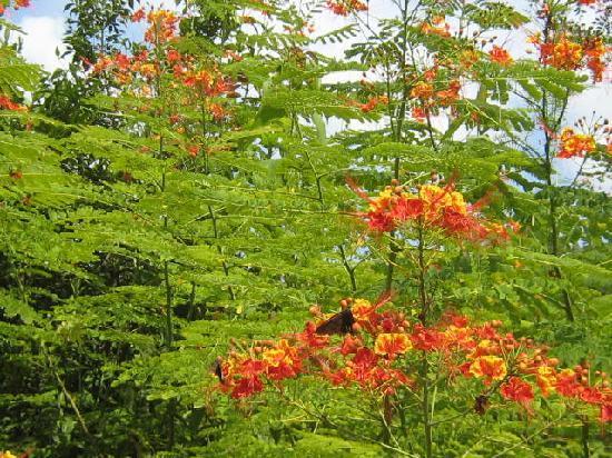 Vallarta Botanical Gardens: Beautiful flower gardens