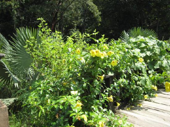 Vallarta Botanical Gardens: Little bridges brimming with flowers