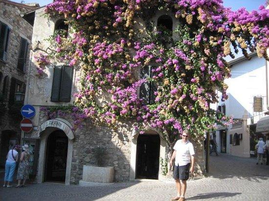 Lake Garda, Italy: Beautiful flowers end of September 09