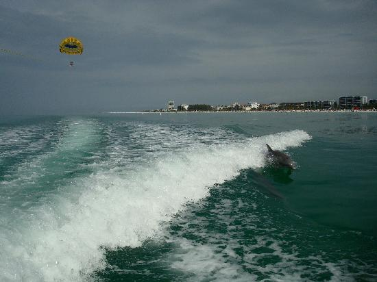 Siesta Key Watersports: parasailing with the dolphins!