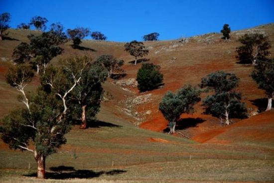 the rolling hills where llamas grazed between Junee and Gundagai, NSW