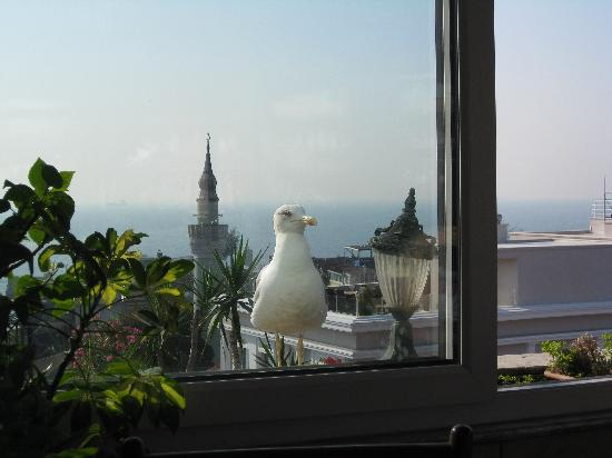 Mevlana Hotel: Visitor on the rooftop