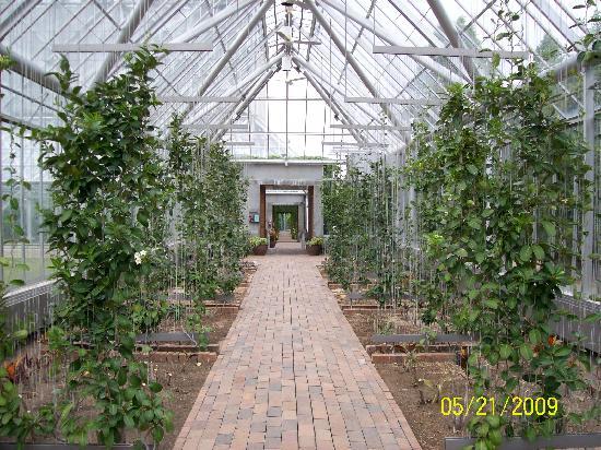Garden Greenhouse Mkrsinfo