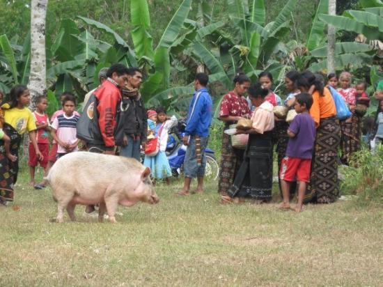 Sumba, Endonezya: Les présents pour la cérémonie de l'enterrement