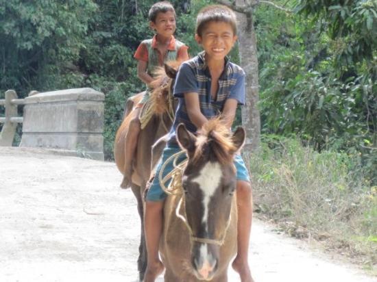 Petits chevaux de Sumba, race à part entière, unique!