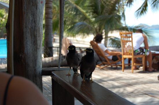 """Sunset Cove Resort: die """"Klau-Vögel"""", beim essen immer dabei"""
