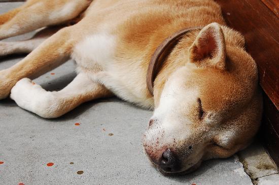 Sunset Cove Resort: Hotel-Hund