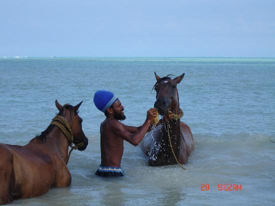 Antigua Village: local washing his horses in the ocean