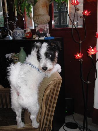 Boogaard's Bed and Breakfast: Curly, one of the proprietors at Boogaard's