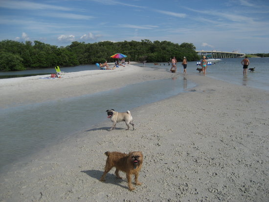 Dog Beach : Alexander (Brussels Griffon) and Napoleon (Pug)