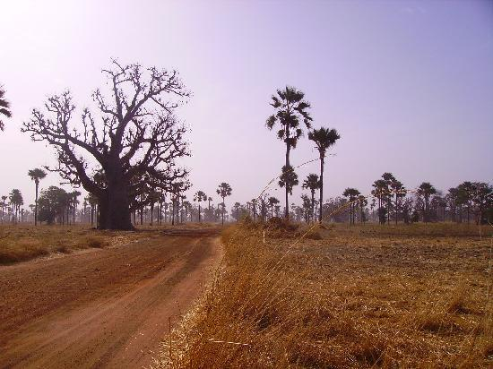 Louga, Senegal: la  savane