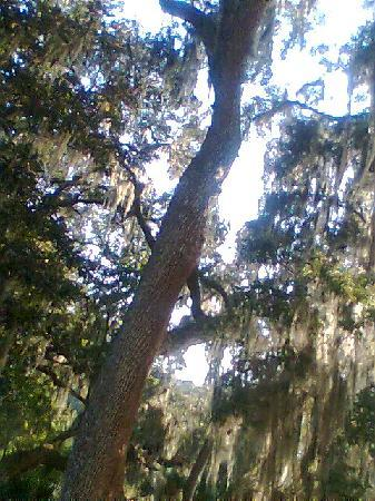 Trees And Lake From My Room Picture Of Wyndham Garden Gainesville Gainesville Tripadvisor