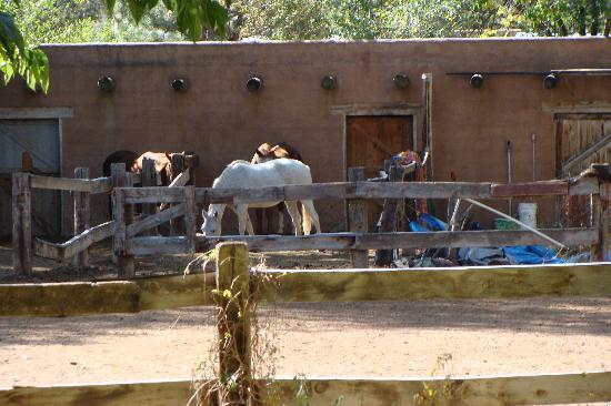 Casita Chamisa: part of backyard