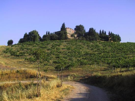 Tenuta di Monaciano: Salendo verso un casale