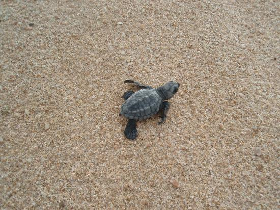 Cabo Pulmo Beach Resort: we released sea turtles