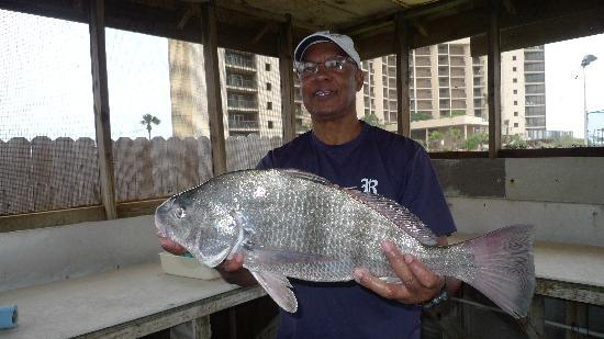 The Dunes Condominiums: Typical fish caught from Horace Caldwell pier