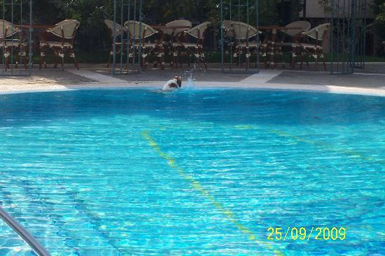 Hotel Sant'Agata: Local dog tries out the pool