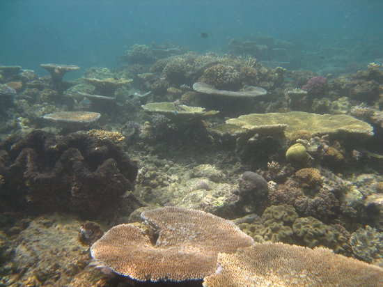Reef Experience : The beautiful seascape.