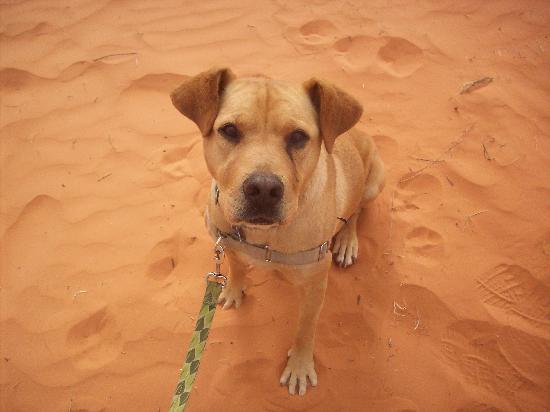 Best Friends Kanab Dogs