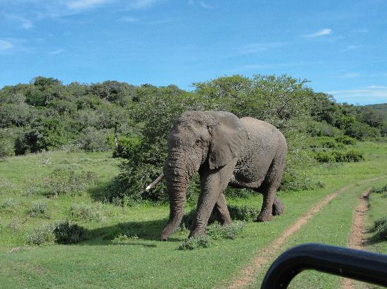 Hopewell Private Game Reserve: The ellies
