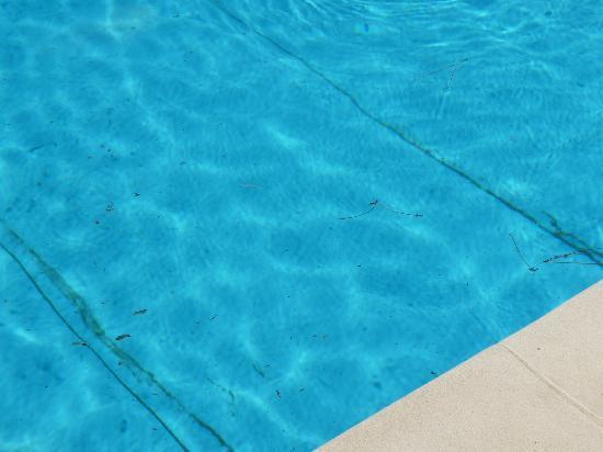 A Trama : Jolie piscine, jamais nettoyée ou entretenue