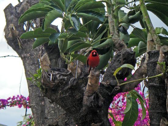 Poipu Crater Resort: birds at our lanai