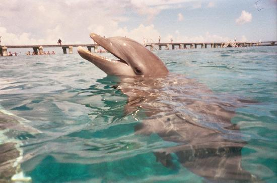 Dolphin Discovery Cozumel: one of our dolphins