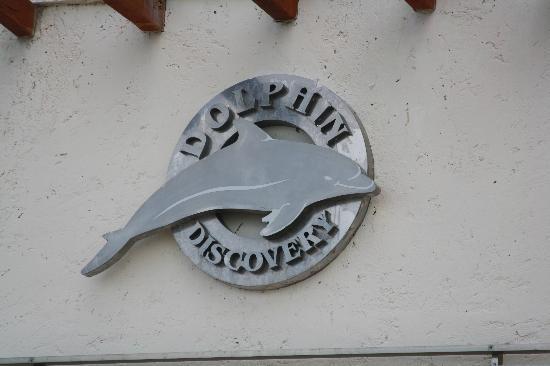 Dolphin Discovery Cozumel: their logo