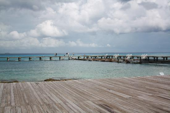 Dolphin Discovery Cozumel: picture of the place