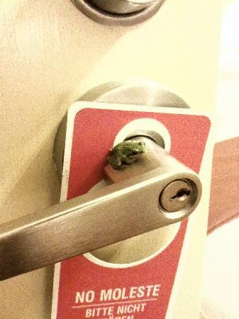 Carmel River Inn: Steinbeck cottage - green tree frog