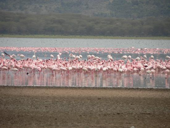 Hippo Point & Dodo's Tower: Pink flamingos on the lake