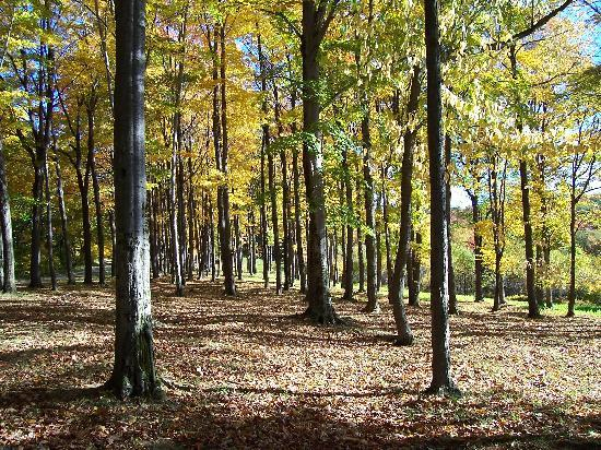 Allegany State Park Campground: Fall