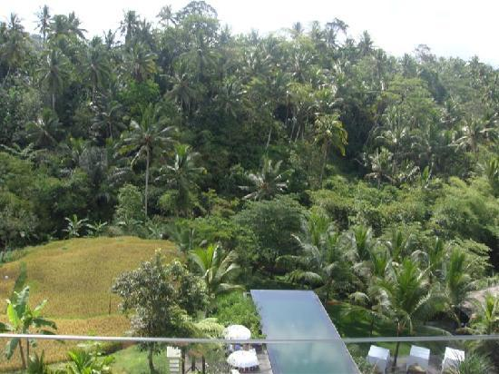 Komaneka at Bisma: Overlooking the main pool from the lobby area