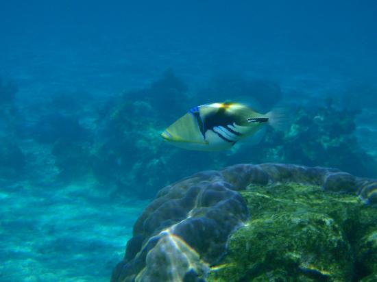 Muri Retreat: snorkeling at Aroa beach
