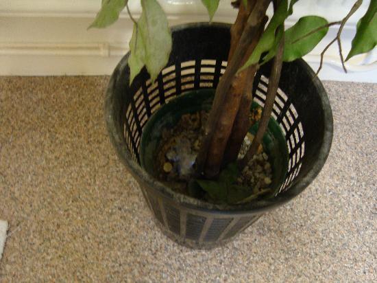 The Chequers: Rubbish plant pot