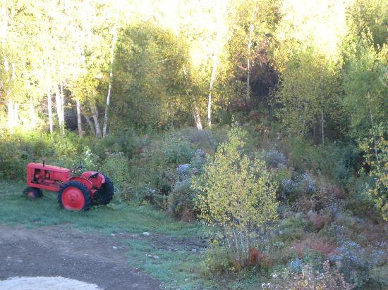 A Newfound Bed & Breakfast: Tractor in the back yard